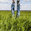Concept of freedom and joy, man with jeans lying in wheat field, - Stock Photo