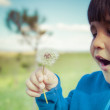 Summer, child in a field blowing a dandelion — Stock Photo