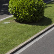 Bush in Madrid city — Stock Photo