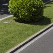 Stock Photo: Bush in Madrid city