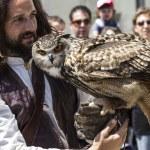 Display of birds of prey, golden owl — Stock Photo