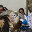 Stock Photo: Display of birds of prey, screech owl