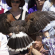 Stock Photo: Display of birds of prey, golden eagle