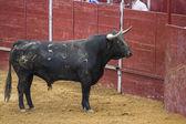 Bullfight in Camarma of Esteruelas, Madrid. 2011. — Stock Photo