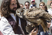 Display of birds of prey, golden owl — Stock Photo