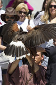 Display of birds of prey, golden eagle — Stock Photo