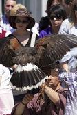 金鹰的猛禽的显示 — 图库照片