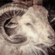 Stock Photo: Goat head with big horns