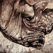 Rhino head — Foto de Stock