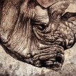 Rhino head — Stockfoto