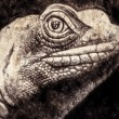 Lizard head in sepia — Stock Photo