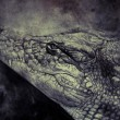Stock Photo: Crocodile illustration