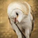 Owl portrait — Stock Photo #40347117