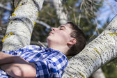 Boy on a tree in park — Stock Photo