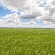 Landscape with green grass. — Stock Photo #41953127