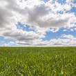 Stock Photo: Landscape with green grass.