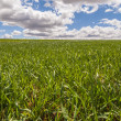 Landscape with green grass. — Stock Photo
