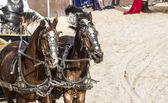 Roman chariots — Stock Photo