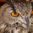 Постер, плакат: Watching eagle owl