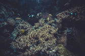 Small coral reef — Stock Photo