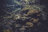 Pequeño arrecife de coral — Foto de Stock