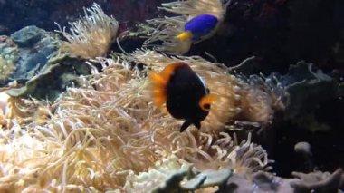 Underwater fish swimming — 图库视频影像