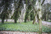 Gardens. Palace of Aranjuez — Stockfoto