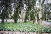 Gardens. Palace of Aranjuez — Stock Photo