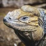 Постер, плакат: Reptile scaly lizard