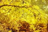 Hojas frescas y verdes — Foto de Stock