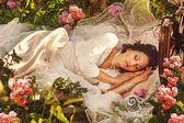 «спящая красавица» лес — Стоковое фото