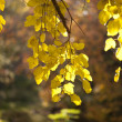 Autumn leaves background on forest — Stock Photo