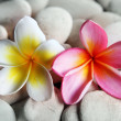Yellow and red frangipani on pebbles — Stock Photo