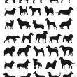 Stock Vector: Popular dog breeds