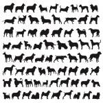 Popular dog species — Stock Photo