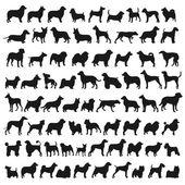 Populära hund arter — Stockfoto