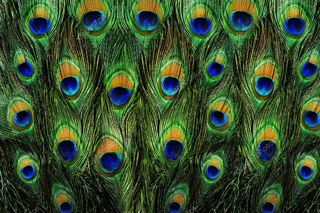 Bright Peacock Feather Backgrounds Pictures to Pin on ...