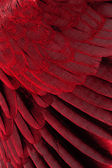 Brown feathers half background — Stock Photo