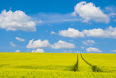 Ciel et champ vert — Photo