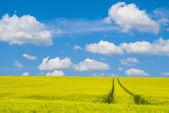 Cielo y campo verde — Foto de Stock