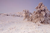 Frozen trees with snow in the mountains at the sunrise — Foto de Stock