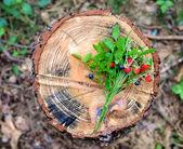 Bouquet fraise sur le moignon — Photo