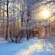 Winter landscape in the park on a sunny day, the trails in the snow and frost on trees — Stock Photo