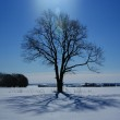 Lonely tree in winter — Stock Photo