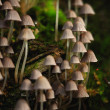 A lot of small toadstools — Stock Photo