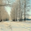 Stock Photo: Road in winter forest, trails