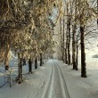 Road in winter forest, trails — Stock Photo #22163303