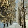 Road in winter forest, trails — Stock Photo #22163307