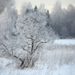 Winter snowy forest, branches covered with snow — Stock Photo