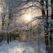 Snowy landscape in the forest — Stock Photo